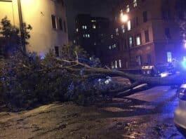 albero crollato corso Mentana