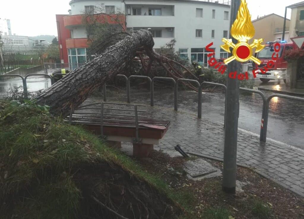 albero abbattuto Melara La spezia
