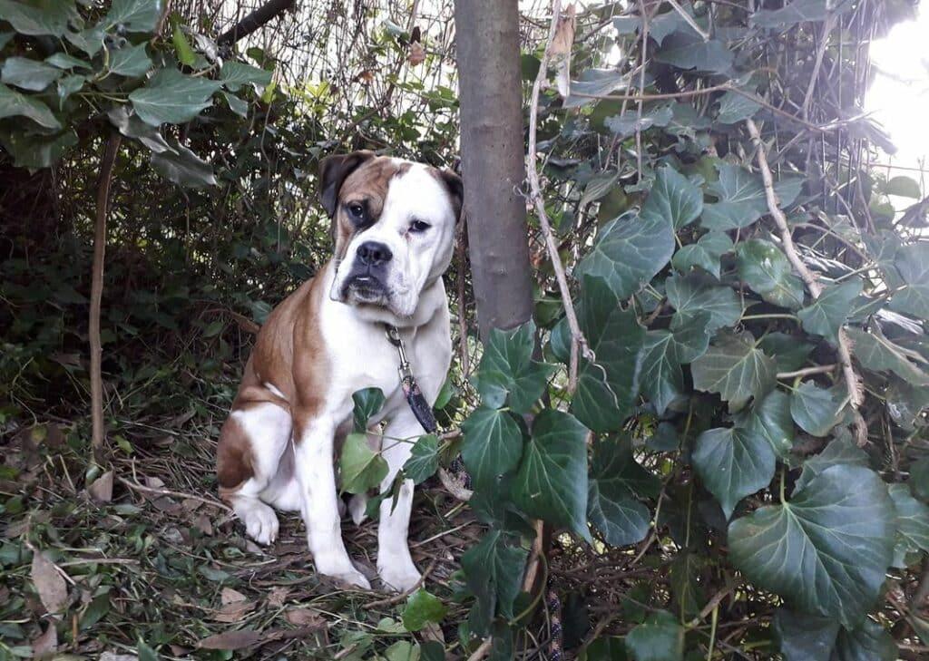 cane abbandonato via Pontevecchio