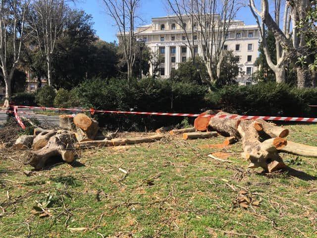 alberi abbattuti Brignole